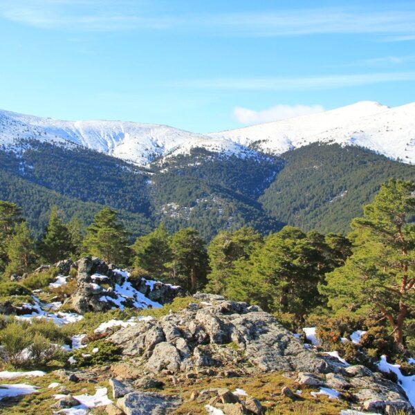 3. Monte de Valsaín y Cerro de la Camorca