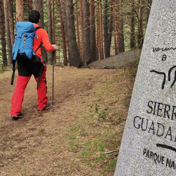 Pinar de camino a la Chorrera de San Mamés en la Sierra de Guadarrama